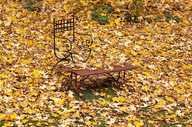 zahrada se spadaným listím