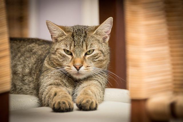 domácí kočka.jpg